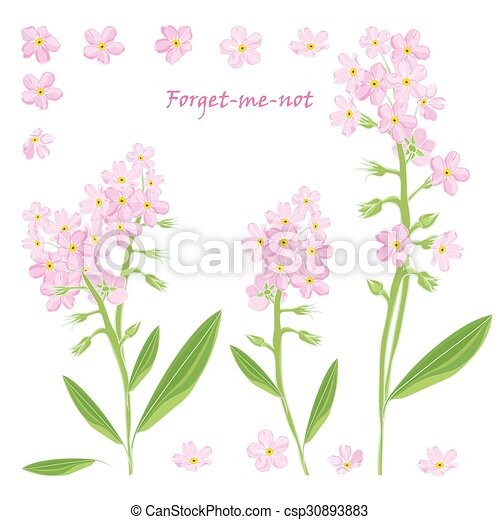 Set of bouquet beautiful pink forget me not flowers set of bouquet set of bouquet beautiful pink forget me not flowers csp30893883 mightylinksfo