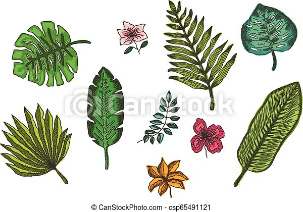 Set Of Bright Colorful Tropical Leaves And Flowers Set Of Cute Hand Drawn Colorful Tropical Flowers And Leaves Plants With Canstock A 1x1 ratio file square 50cmx50cm or any combination. https www canstockphoto com set of bright colorful tropical leaves 65491121 html