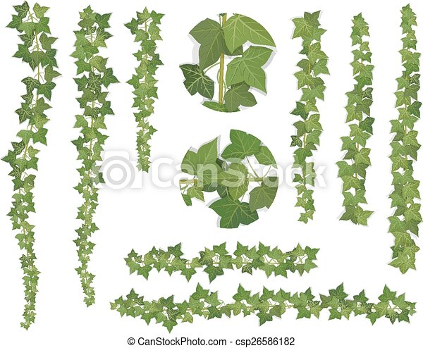 Vector Of Set Of Brushes Ivy Vine Branches Ivy Branches