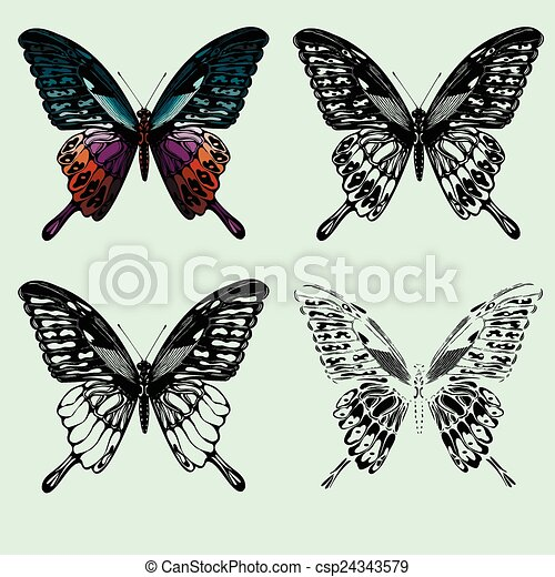 Set of butterflies. hand-drawing. Vector illustration. - csp24343579