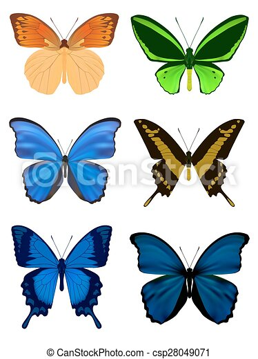 Set of Butterfly isolated on white - csp28049071