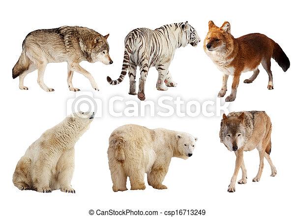 Set of Carnivora mammal over white   - csp16713249