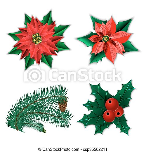 set of christmas decorations christmas flower poinsettia and holly and fir tree branch with cone isolated on white vector illustration