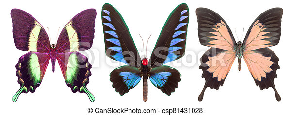 Set of colorful butterflies isolated on a white background - csp81431028