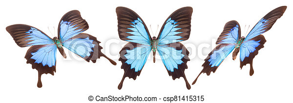 Set of colorful butterflies isolated on a white background - csp81415315