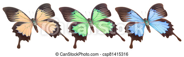 Set of colorful butterflies isolated on a white background - csp81415316