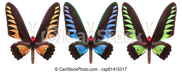 Set of colorful butterflies isolated on a white background - csp81415317