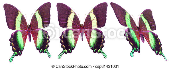 Set of colorful butterflies isolated on a white background - csp81431031