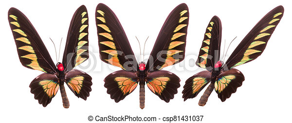Set of colorful butterflies isolated on a white background - csp81431037