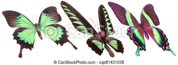 Set of colorful butterflies isolated on a white background - csp81431038