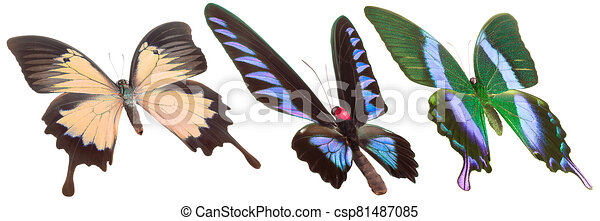 Set of colorful butterflies isolated on a white background - csp81487085
