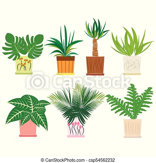 Set Of Colorful Houseplants In Pots Standing In Line Home