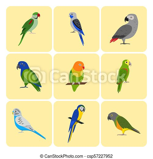 Set of colorful parrot icons