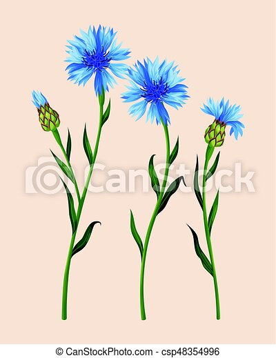 Set of cornflowers - csp48354996