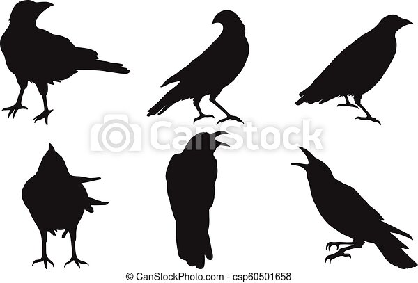 Set of crow vector on white background. Birds vector by hand drawing - csp60501658
