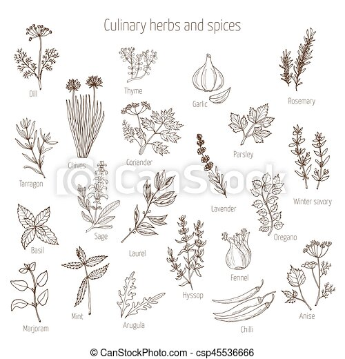 Set of culinary herbs and spices - csp45536666