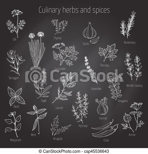 Set of culinary herbs and spices - csp45536643