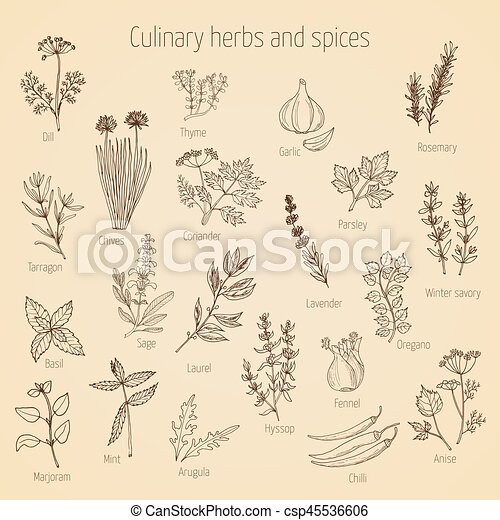 Set of culinary herbs and spices - csp45536606