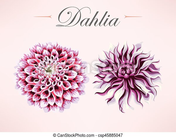 Set of dahlia flowers - csp45885047