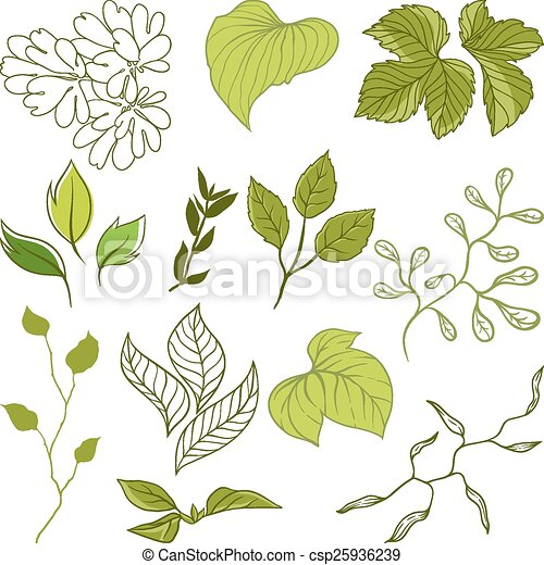 Set of different leaves. A vector illustration - csp25936239