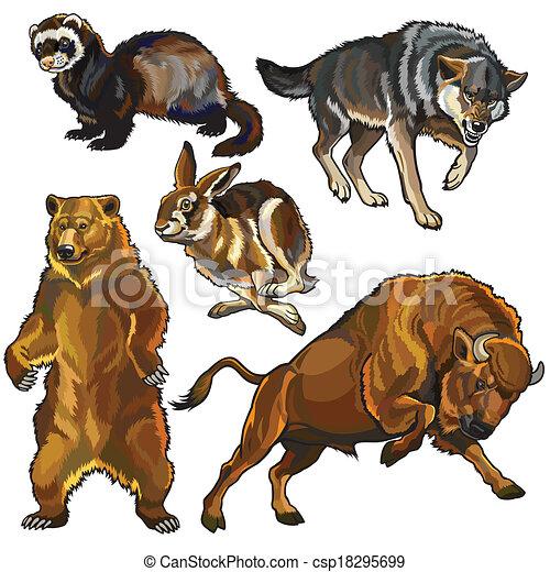 set of european wild animals - csp18295699