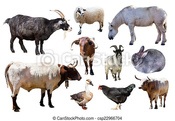 Set of farm animals on white - csp22966704