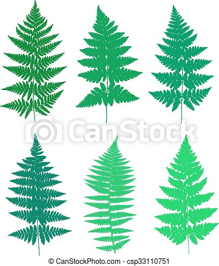Set of fern frond silhouettes. - csp33110751