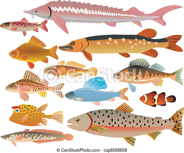 set of fishes - csp6568658