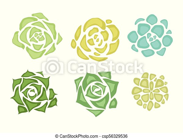 Set of flat succulents with a top view on a white background - csp56329536