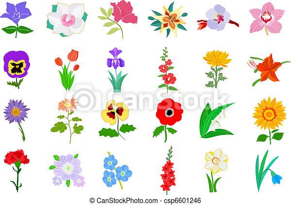 Set of flowers - csp6601246