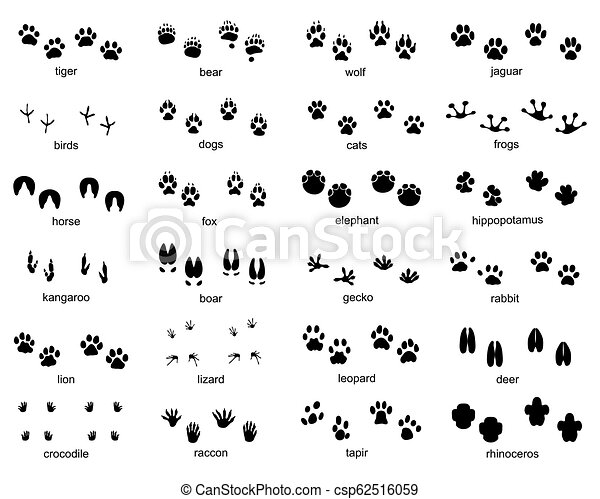 Set of footprints of wild animals - csp62516059