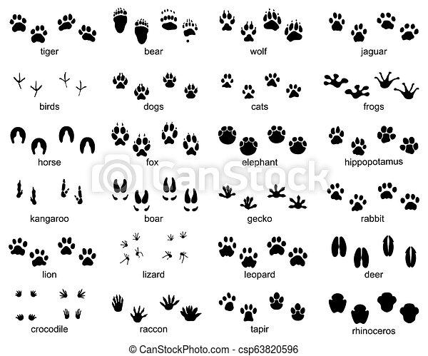 Set of footprints of wild animals - csp63820596