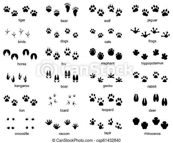 Set of footprints of wild animals - csp61432840