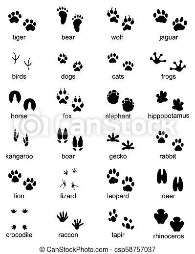 Set of footprints of wild animals - csp58757037
