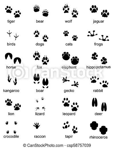 Set of footprints of wild animals - csp58757039