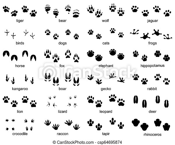 Set of footprints of wild animals - csp64695874