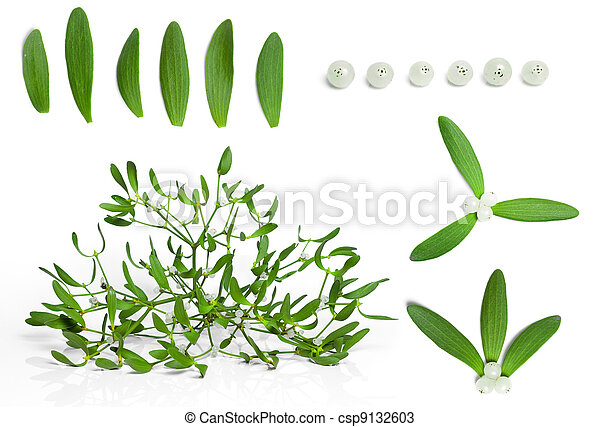 set of fresh green mistletoe with berries isolated on white background - csp9132603