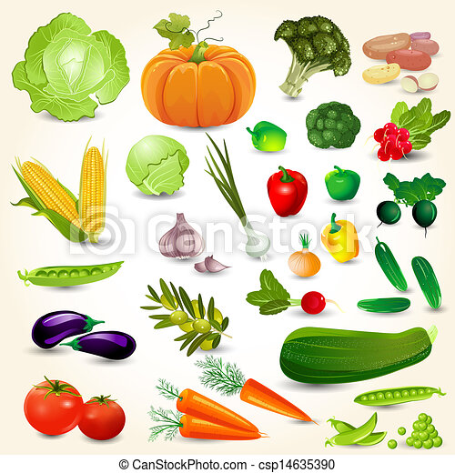 Set of fresh vegetables for your design - csp14635390
