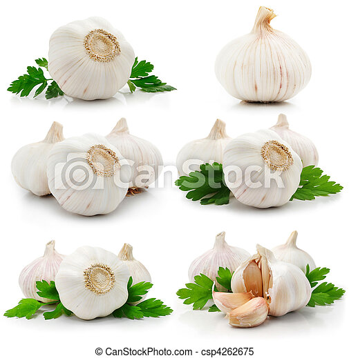 set of garlic fruits with green parsley leaves - csp4262675