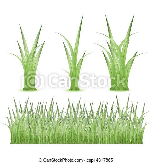 Set of Green grass - csp14317865