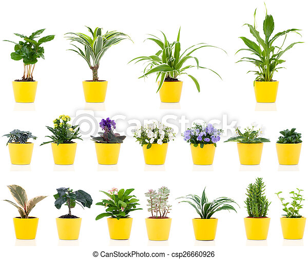 set of green house plant, isolated - csp26660926