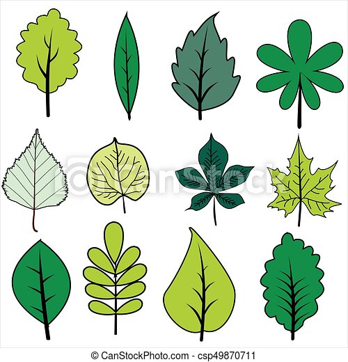 Set of green leaves on white background - csp49870711