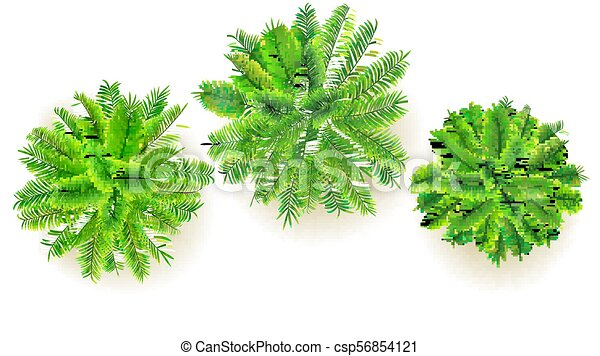Christmas Tree Top View.Set Of Green Palm Trees Vector 3d Illustration Isolated On White Background Top View On Branches Of Coconut Trees Exotic Jungle Trees For Your