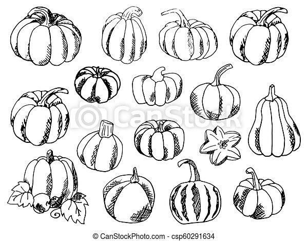 Set of Hand-Draw doodle Pumpkins. Vector illustration. - csp60291634
