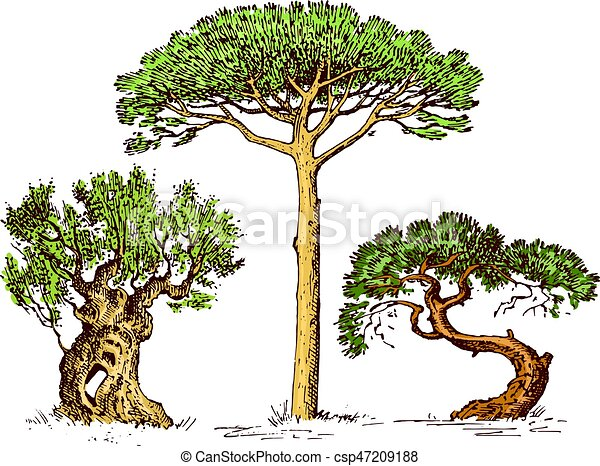 Set of hand drawn trees italian cypress and stone pine ...
