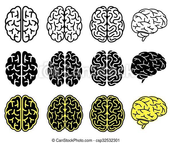 Set of human brains.  - csp32532301