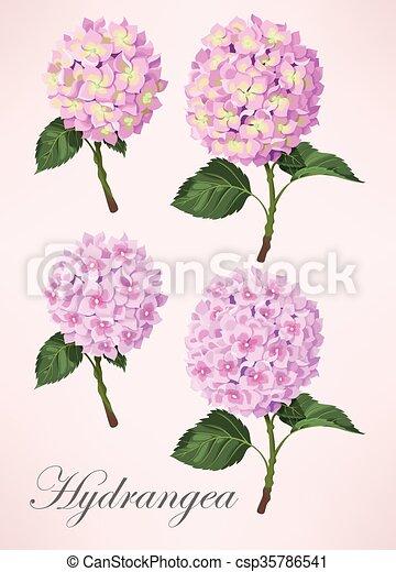 Set of hydrangea flowers - csp35786541