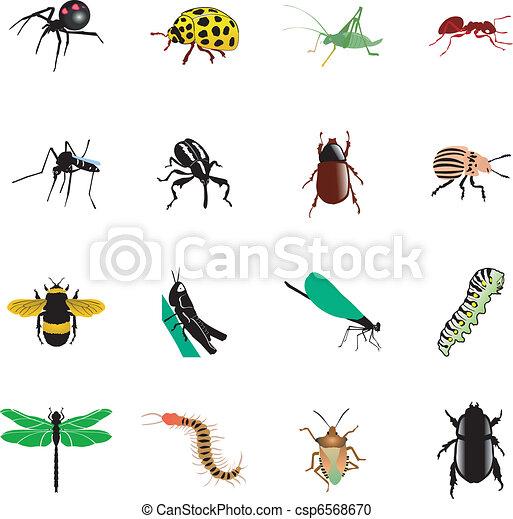 Set of insects - csp6568670