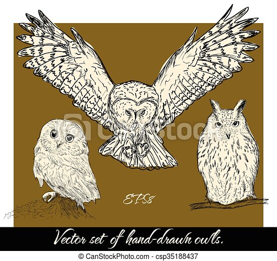 Set of isolated hand-drawn owls 1.  - csp35188437