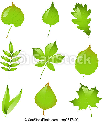 Set of isolated vector leaves. - csp2547409
